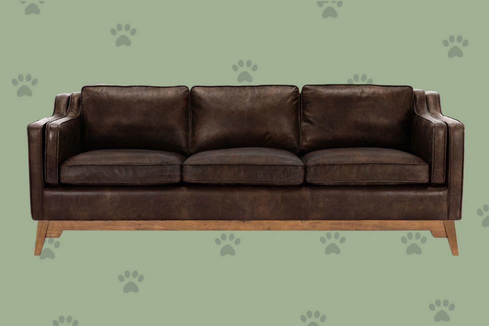 11 Le meilleur canapé convivial pour animaux de compagnie que vous (et vos amis en peluche) aimerez