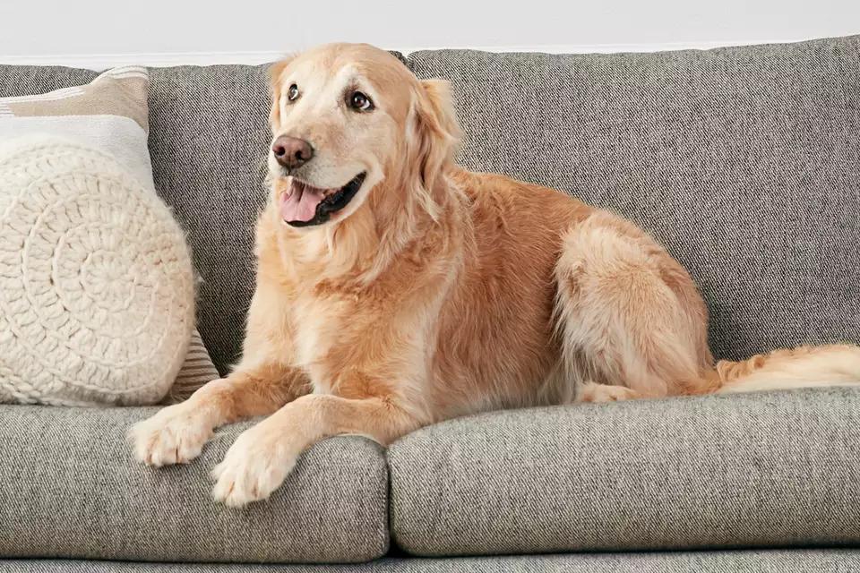 Choix des meubles pour les propriétaires de chiens et de chats