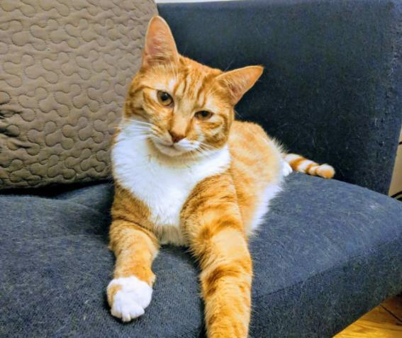 """Kat Dennings partage la surprise d'anniversaire amusante qu'elle a faite pour son chat : """"Elle ne pouvait pas le croire&qu"""