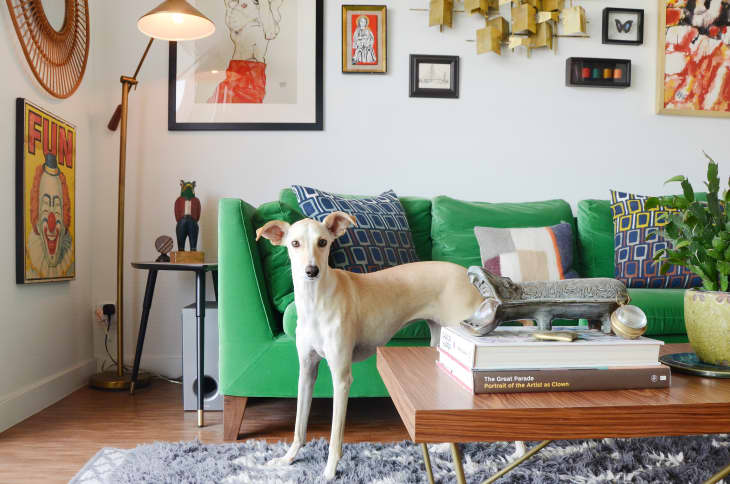 Les meilleurs (et les pires) tissus de canapé pour les propriétaires d'animaux de compagnie