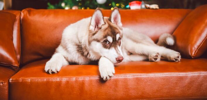 10 façons de mettre vos meubles à l'épreuve des chiens