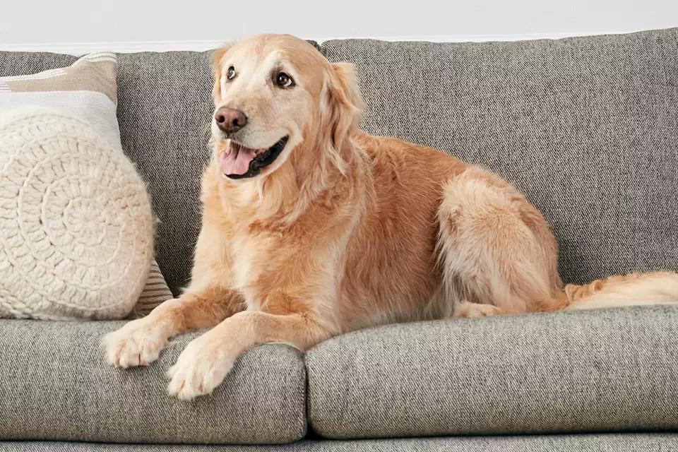Choix de rembourrage de canapé des propriétaires de chats et de chiens